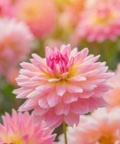 FLOWERS & ORNAMENTAL PLANTS